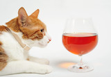 Tomcat attractable by a brandy snifter, on white background poster