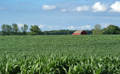 Farmers Field and Barn