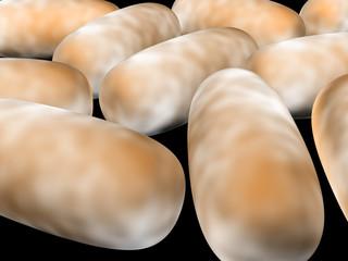 3D render of bacteria