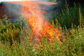 orange flame in green grass