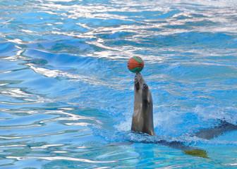 Phoque jouant avec un ballon