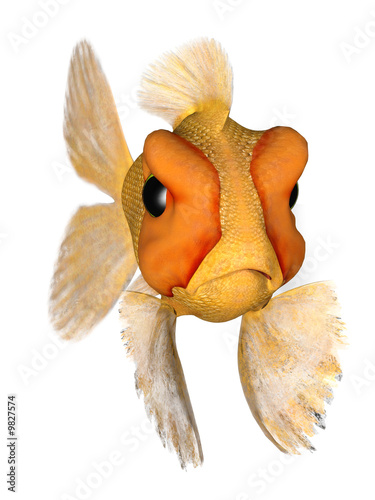 cute goldfish cartoon. A cartoon goldfish looking