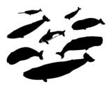 Verschiedene Wale poster