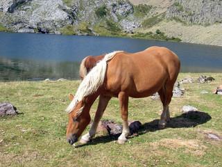 Cheval au lac d'ayous
