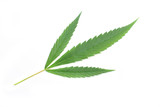 leafs of marijuana on the white background poster