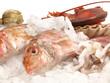Fisch auf Eis