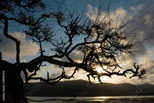 tree struggling to survive at beach in silhouette