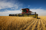 Fototapety modern combine harvester working on a wheat crop