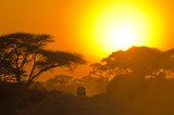 Fototapety safari jeep driving through savannah in the sunset