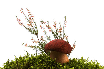 mushroom, moss and heather isolated on white