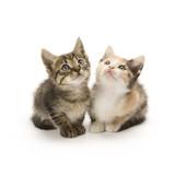 Fototapete Haustier - Pets - Haustiere