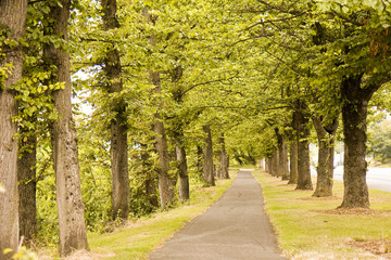 A straight walking path through green trees