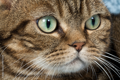 Pretty cat in closeup portrait looking arrogant