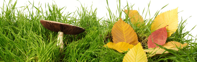 Autumn leaves on a young green grass