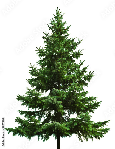 The Bare Christmas tree ready to decorate - 9877999