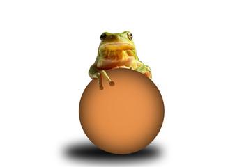 reinette verte sur une sphere