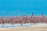 flocks of flamingo, lake nakuru, kenya poster