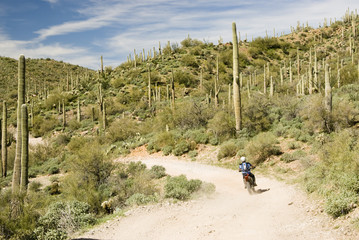a dirt biker traveling through the Sonoran desert wilderness