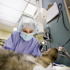 Femnale veterinarian performs surgery on a small dog