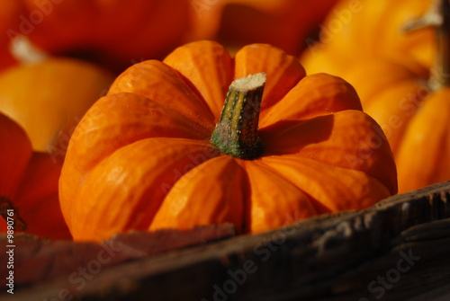 Bunch of pumpkins on a farmers market