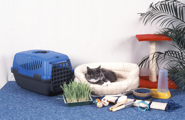 nécessaire à chats