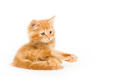A yellow kitten holding out its paw on a white background poster