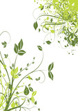 Fototapety tige et feuille verte