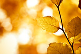 yellow and brown foliage with vibrant colors in autumn poster