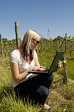 Woman Checking Vineyard progress and recording details on laptop poster