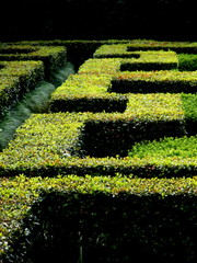 Siepe a meandro nei giardini della Landriana, Tor San Lorenzo