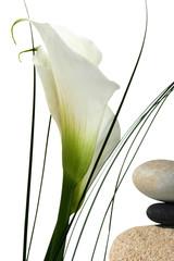 Composition fleurs et galets