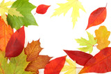Autumn - colorful October tree leaves. Frame made of leaves. poster