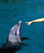 giving hand to a dolphin