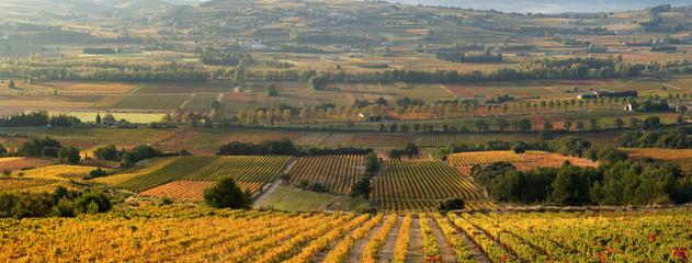 panoramique champ de vigne en automne