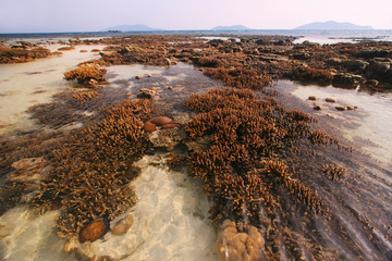Pristine coral reefs exposed during low tide, Malaysia