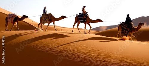 Fototapeten,karawane,wildnis,kamel,kamel