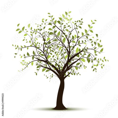 vecteur série, arbre vectoriel fond blanc - green tree on white