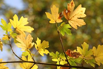 Herbstblätterimpression