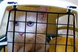 Fototapety Cage de transport avec Chat