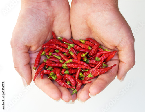 Harvest of chili peppers