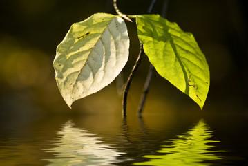 luci e colori d'autunno 2