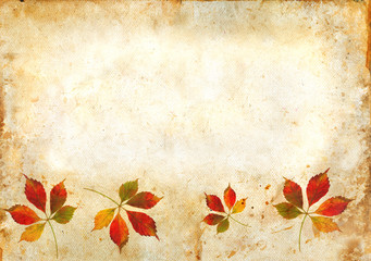 Virginia Creeper leaves in autumn on a grunge background.