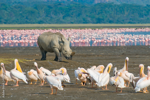 Foto op Canvas Neushoorn rhino in lake nakuru national park, kenya
