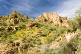 scenic view of the Sonoran desert wilderness in Arizona poster