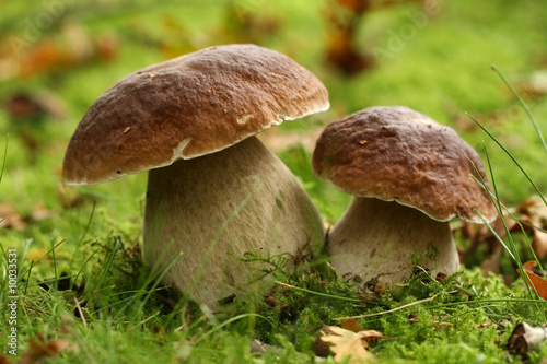 Two mushrooms - 10033531