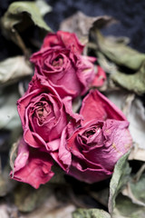 Verwelkte Rosen als Metapher für Vergänglichkeit