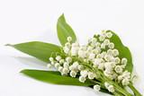 Fototapete Blumenstrauss - Homey - Blume