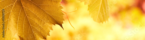 yellow red foliage banner background with vivid colors