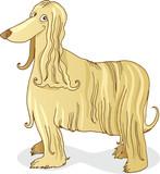 afghan hound dog poster