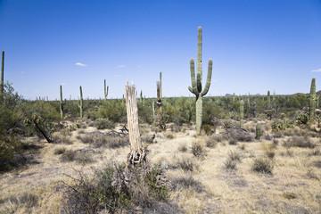 Saguaro Nationalpark Arizona